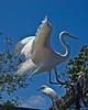 Florida-20080409-0137