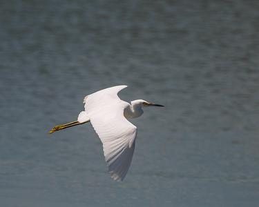 Egrets at Worlds End