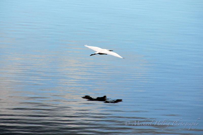 Egret - Hiroshima