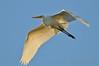 Egret - Perth