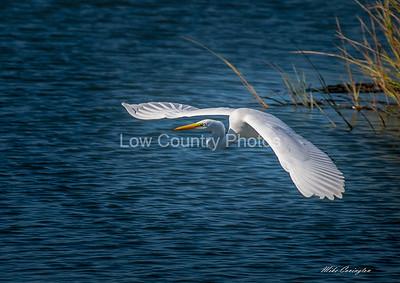 Egrets in the Marsh