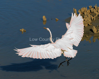 (9) 3rd Place - South Carolina State Park Wildlife Photo Contest