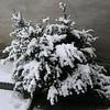 Der Winter ist da !