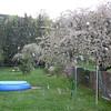 Kischblütenregen !