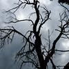 Alter Zwetschkenbaum