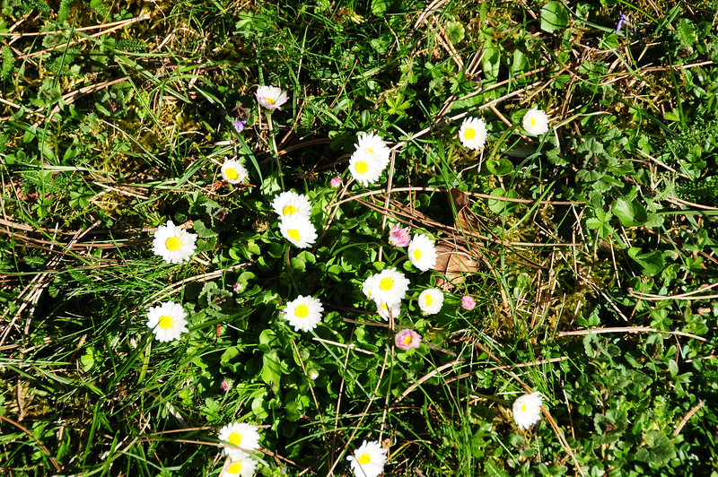 Frühling im April