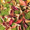 Oktoberfarben