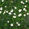 Frühlingsknospen