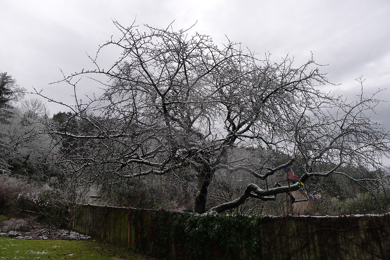 Eisregen