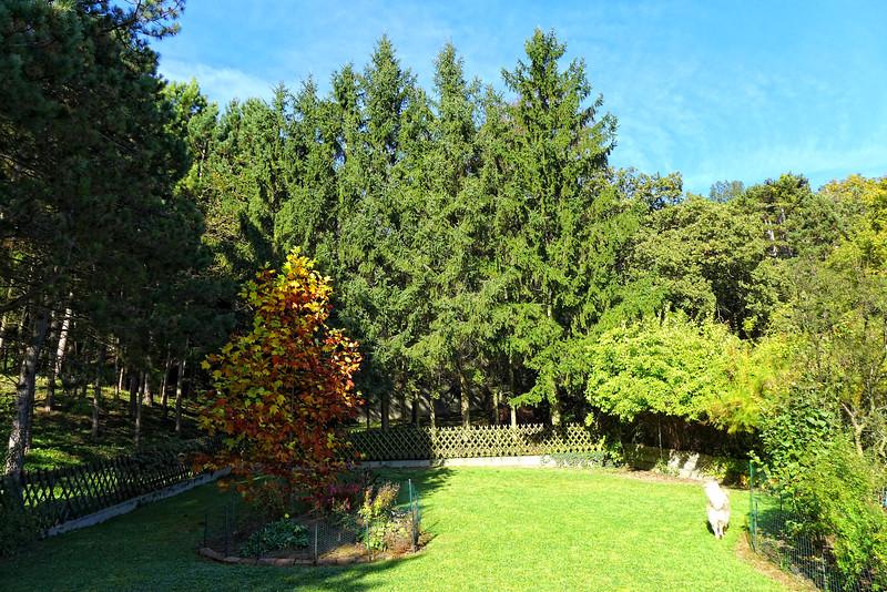 Garten2014