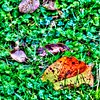 Herbst2018