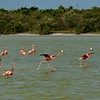 Flamingo walk on water