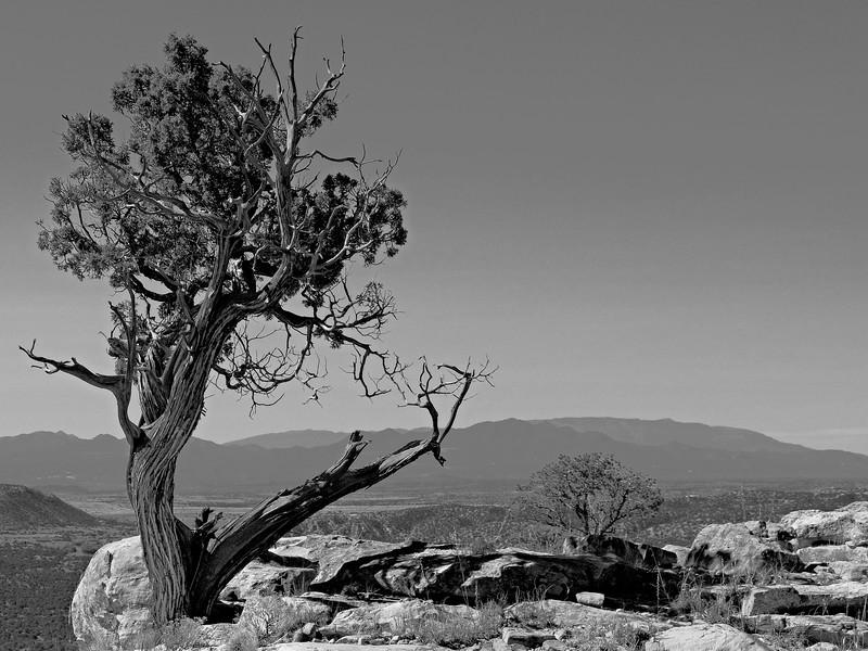 Sentinel Tree