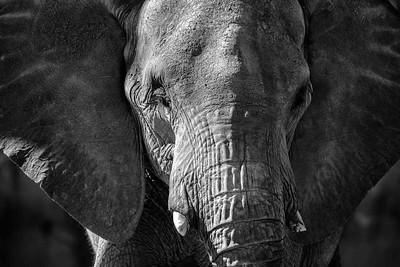 Elephants Tucson Zoo