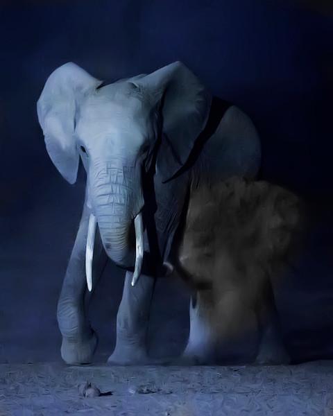 Dusting Night Elephant