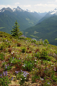 Wildflowers and Chilliwack River Valley