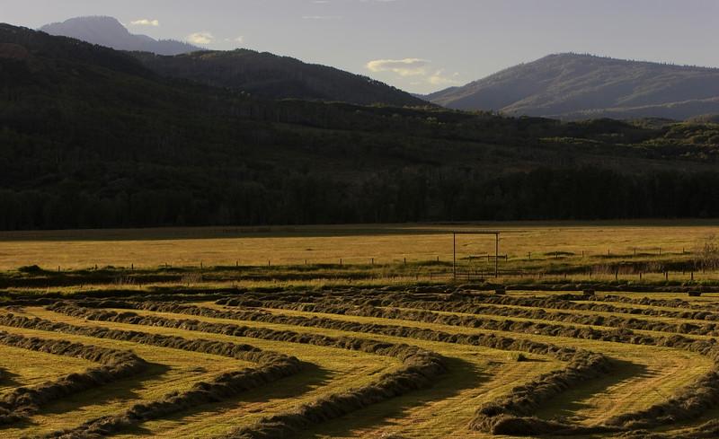 Harvesting Hay #2