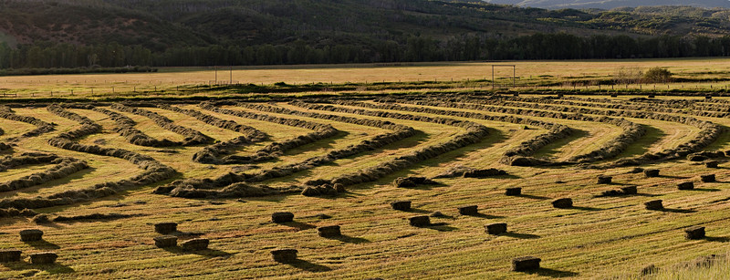 Harvesting Hay #1