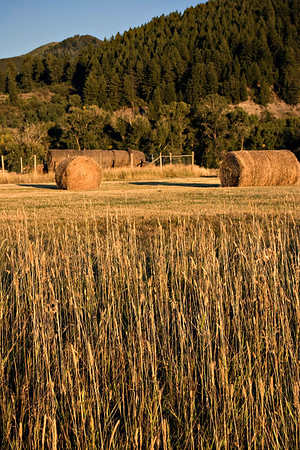 S-S Ranch Hay #1