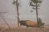 Yellowstone 06 415