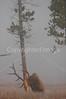 Yellowstone 06 444