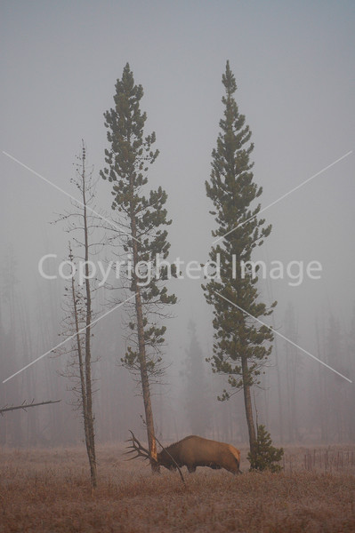 Yellowstone 06 405
