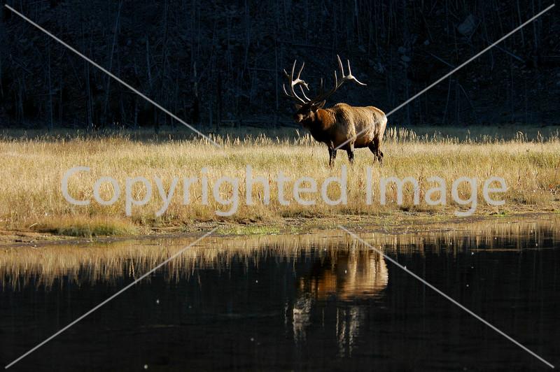 Yellowstone 06 755
