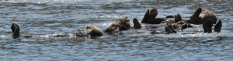 otters_group_DSC_0055