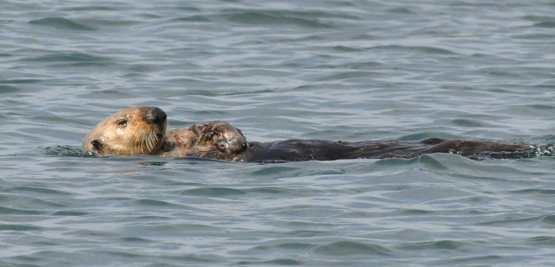 This otter was just resting.