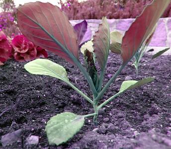 Organic Garden – San Ysidro Ranch, Santa Barbara