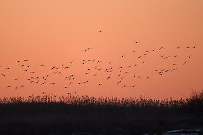Fåglar i soluppgången