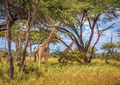 Disappearing Giraffe