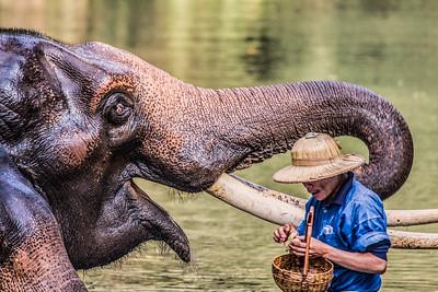 Big Smile, Elephant Camp