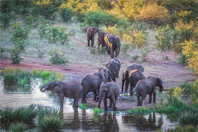 Evening at the Waterhole