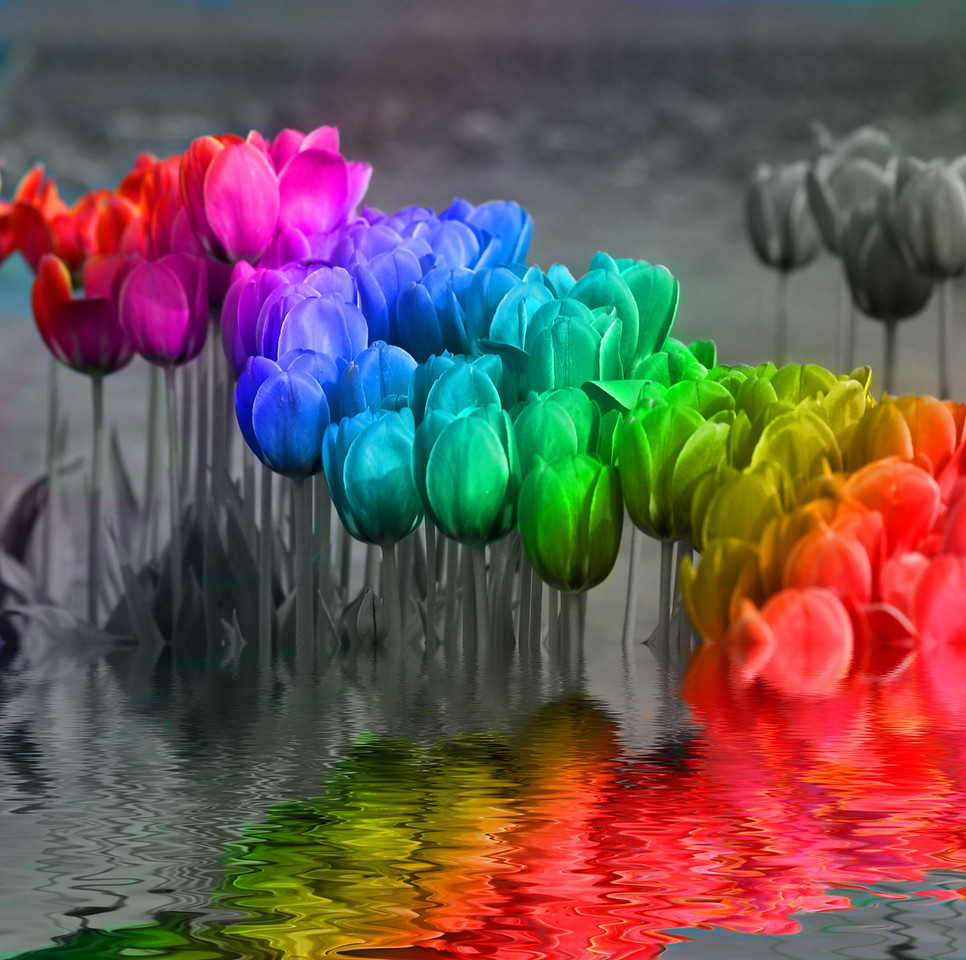 Rainbow Tulips flooded