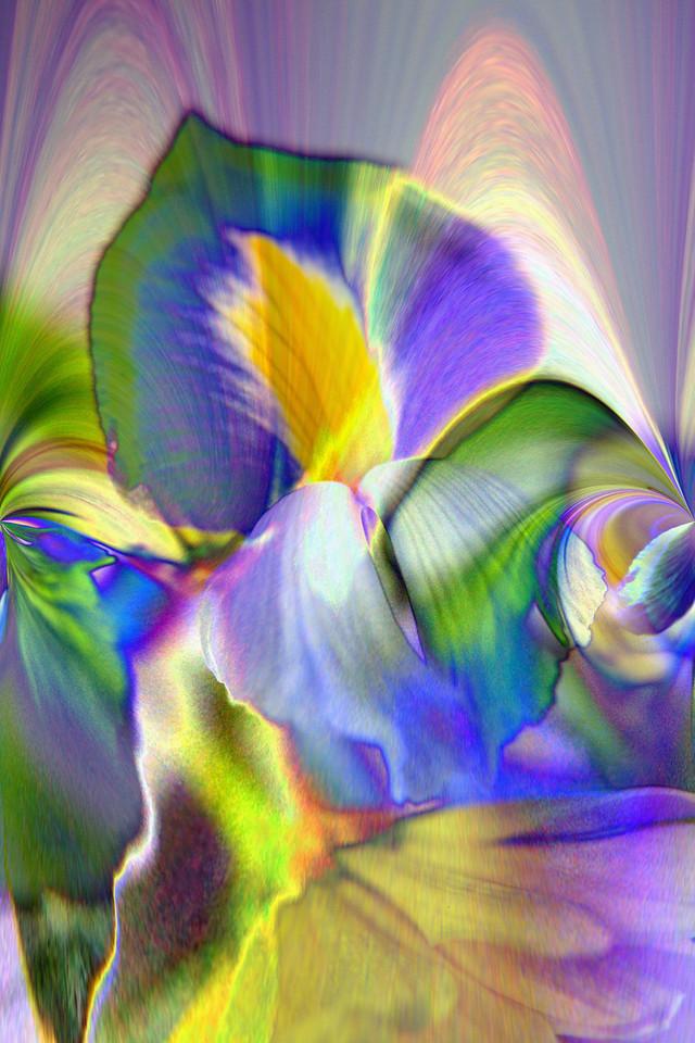 lilys 2