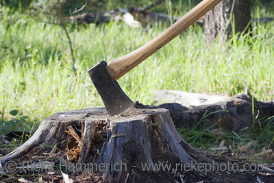 Axe in tree stump - jasper national park, canadian rockies, alberta - adobe RGB