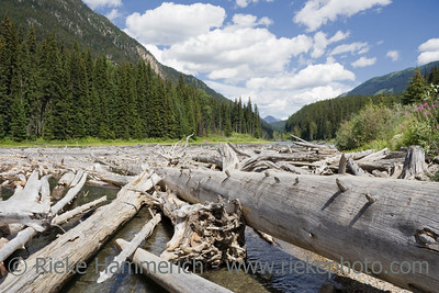Duffey Lake and Cayoosh Creek with dead Trees – Duffey Lake Provincial Park, Coast Mountains, British Columbia, Canada