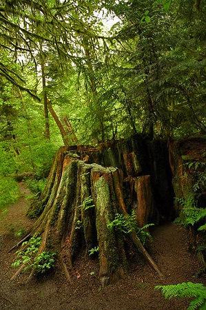 log clearcut 4