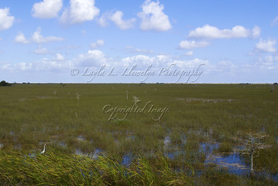 Overlooking the river of grass at Everglades National Park