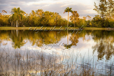 Day 130 Reflections of Florida's Landscape