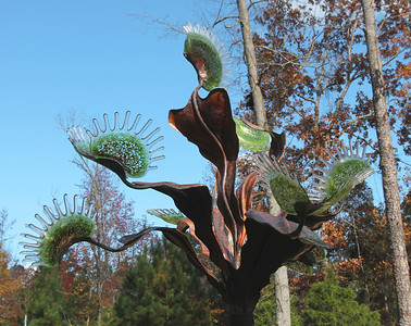 """Dionaea Muscipula Arboresque""        we know it as a Venue Fly Trap"