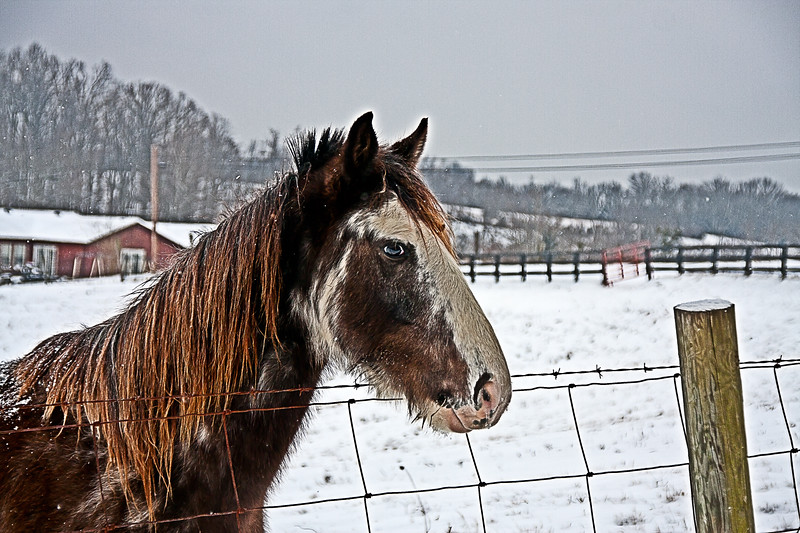 Equine - snowy day