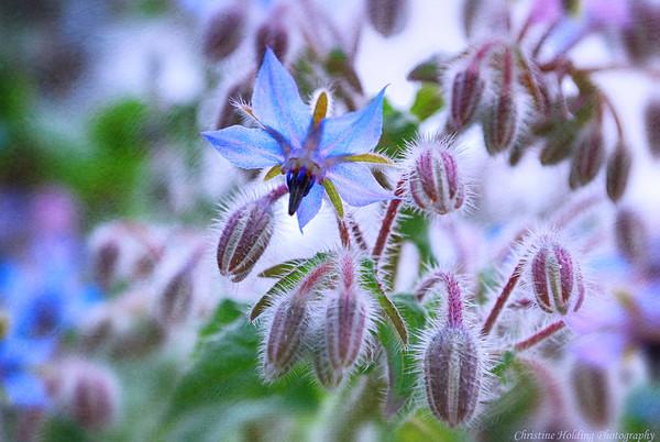 Esalen Flowers
