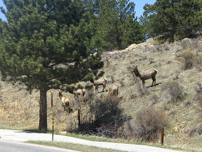 2008 - view from Estes Park area - family of Elk