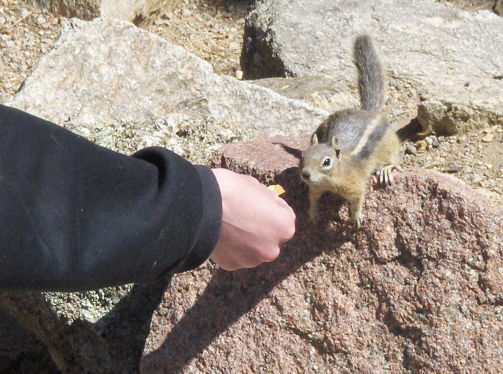 2008 - view from Estes Park area - Tony has a little friend - is it Alvin?