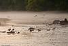 Etowah River, 2009-4