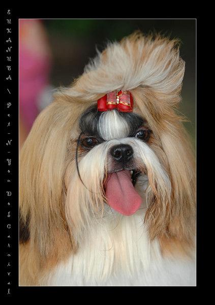 EUKANUBA / Pet-N-You Dog Carnival