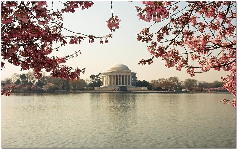 Cherry Blossoms frame - 08