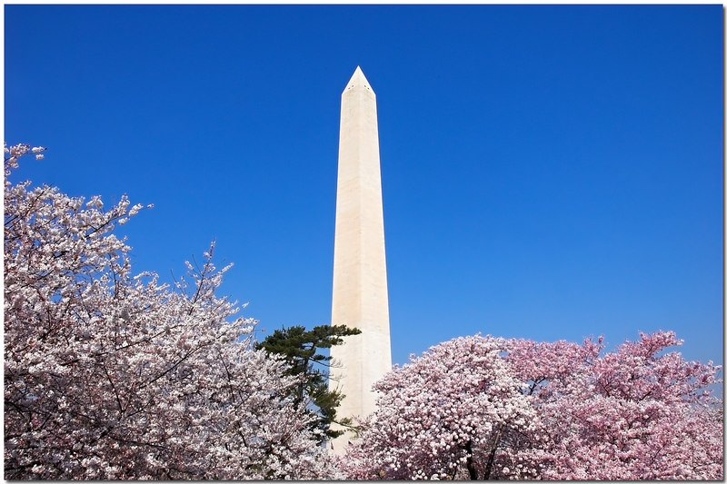 Cherry Blossoms frame - 23